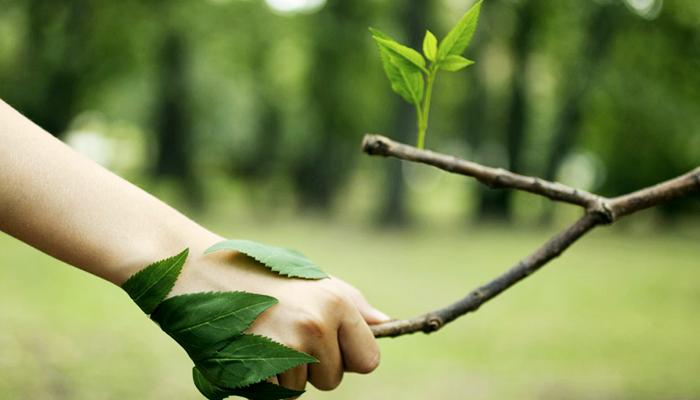 Licenciamento Ambiental - Laudo
