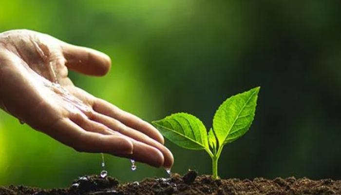 O que é compensação ambiental